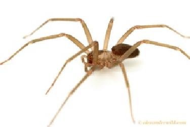 Spiders Spider Exterminators Pinpoint Pest Control