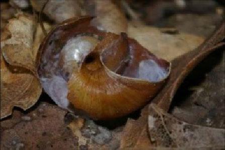 Garden Snails | Pinpoint Pest Control