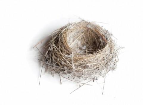 The Hidden Danger Of Bird Nests Pinpoint Pinpoint Pest Control