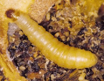Stored Food Pests | Pinpoint Pest Control