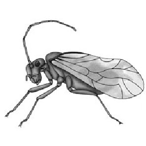 Psocids | Pinpoint Pest Control